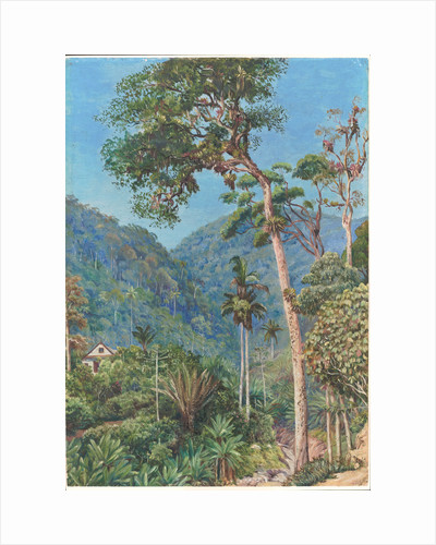 90. Glimpse of Mr. Weilhorn's house at Petropolis, Brazil, 1880 by Marianne North