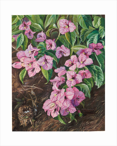 108. Foliage and flowers of a Brazilian climbing shrub and humming birds, 1873 by Marianne North