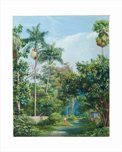 113. Road near Bath, Jamaica, with cabbage palms, bread fruit, cocoa, and coral trees, 1872 by Marianne North