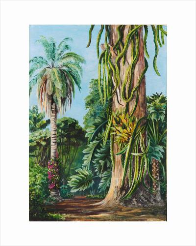 117. Scene in Dr. Lund's garden at Lagoa Santa, Brazil, 1873 by Marianne North