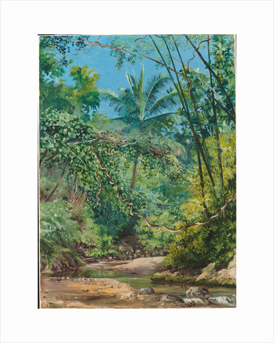 130. Bamboos, cocoa nut trees, and other vegetation in the Bath valley, Jamaica, 1872 by Marianne North