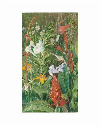 143. Brazilian wild flowers, 1873. by Marianne North