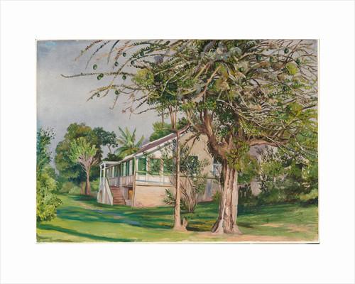 144. Bermuda Mount, Jamaica, 1872. by Marianne North