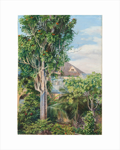 146. The garden of King's House, Spanish Town, Jamaica, 1872 by Marianne North