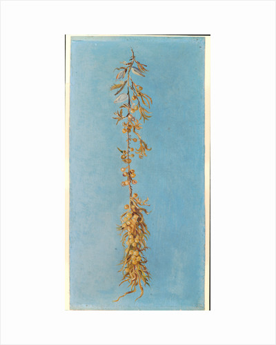 163. Study of gulf weed, 1970 by Marianne North