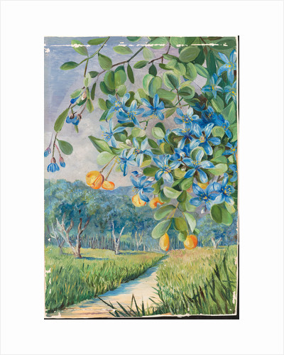 168. Foliage, flowers, and fruit of lignum vitae, Jamaica, 1872 by Marianne North