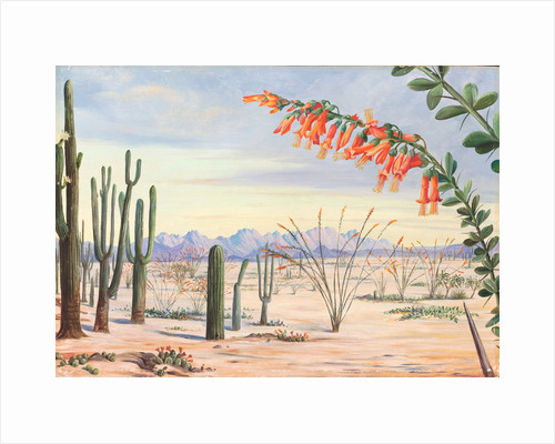 185. Vegetation of the desert of Arizona, 1875 by Marianne North