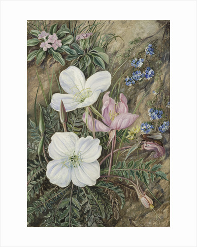 9. Common Flowers of Chili. by Marianne North