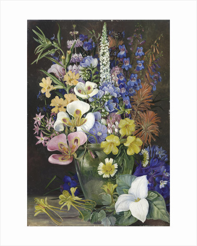 203. Group of Californian Wild Flowers. by Marianne North