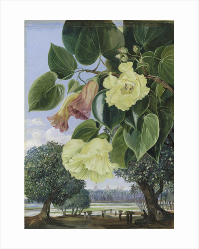 256. Foliage and Flowers of the Suriya or Portia; the Pagodas of Madura in the distance. by Marianne North