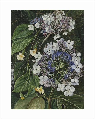 273. Flowers of Darjeeling, India. by Marianne North