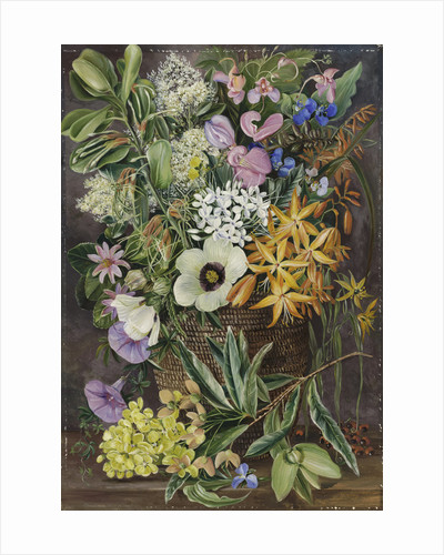 375. Flowers of St. John's in Pondo Basket. by Marianne North