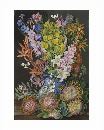438. Wild Flowers of Ceres, South Africa. by Marianne North