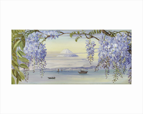 658. Mount Fuji by Marianne North