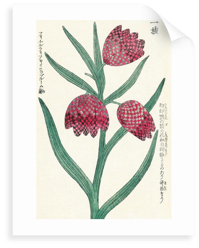 Honzo Zufu [Fritillaries] by Kan'en Iwasaki