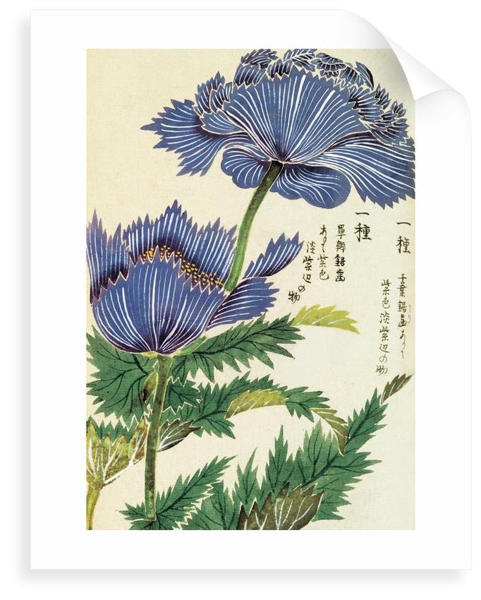 Honzo Zufu [Blue Flower] by Kan'en Iwasaki