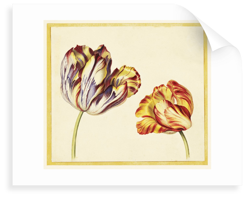 Tulips by Simon Verelst