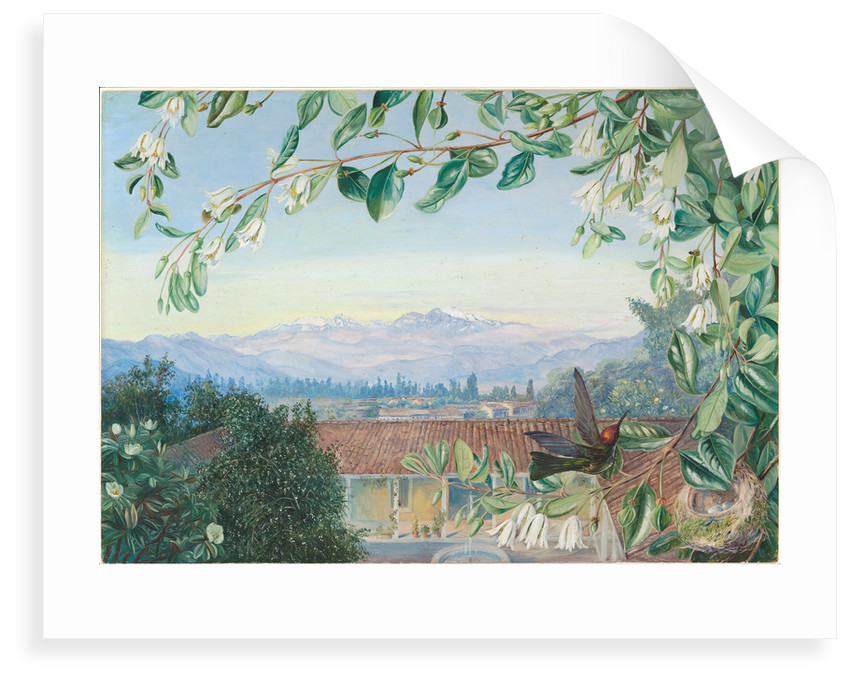 20. The permanent snows, from Santiago; Patagua in front with hummingbird and nest, 1880 by Marianne North