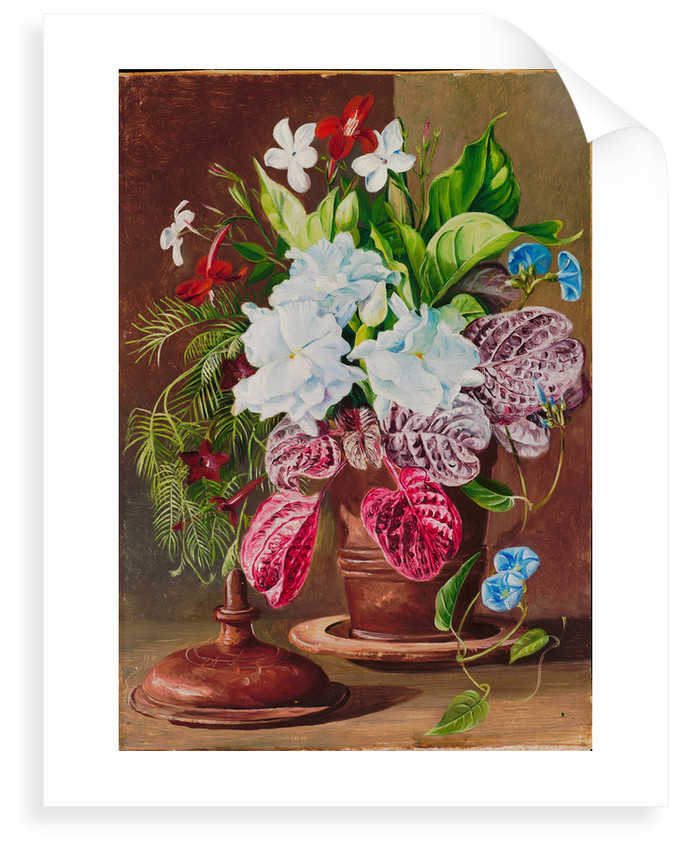 106. Brazilian flowers, 1873 by Marianne North