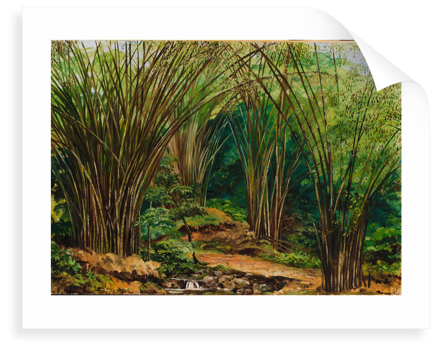148. Valley of bamboos, near Bath, Jamaica , 1873. by Marianne North