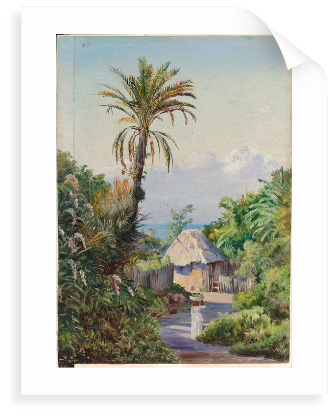157. Date palm and negro hut, near Craigton, Jamaica, 1872 by Marianne North