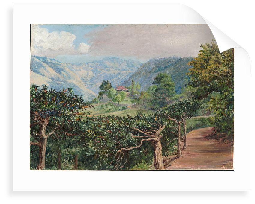 177. Coffee plantation at Clifton Mount, and the Blue Mountains beyond Jamaica, 1872 by Marianne North