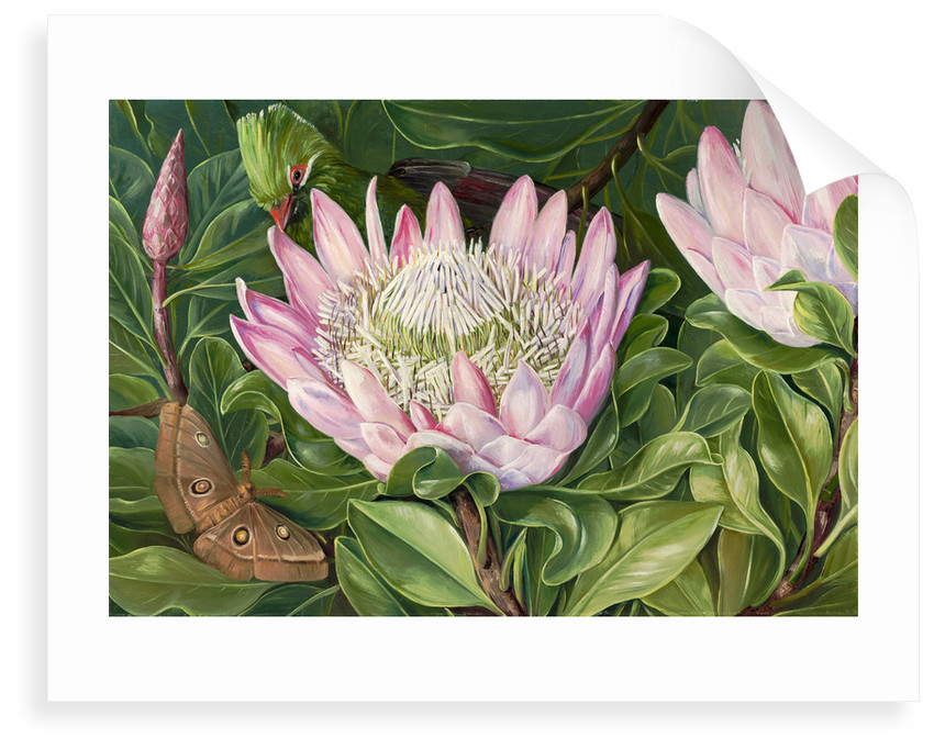 419. Not one Flower, but many in one, Van Staaden's Kloof. by Marianne North