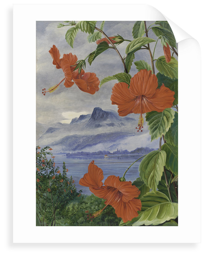 488. Mandrinette and mountain home of the Pitcher Plant in the distance by Marianne North