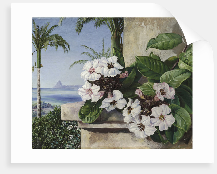 65. Foliage and Flowers of a climbing plant with Royal Palms and Sugarloaf Mountain in the background, Brazil. by Marianne North