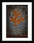 Autumnal Red Oak by Peter Straw