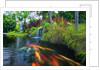 Sunnyside Gardens by Derek Galon