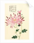 Honzo Zufu [Spider Chrysanth] by Kan'en Iwasaki