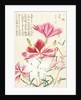 Honzo Zufu [Carnations] by Kan'en Iwasaki