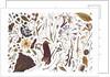 Herbarium Specimen Painting page 1 by Rachel Pedder-Smith