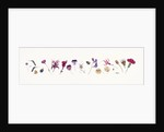 Magenta Flower line by Rachel Pedder-Smith