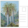 8. Chilean palms in the valley of Salto, 1880 by Marianne North