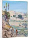 19. View near Quilpue, Chili, 1880 by Marianne North