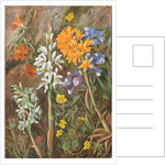22. Chilean ground orchids and other flowers, 1880 by Marianne North