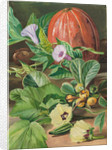 29. Some fruits and vegetables used in Brazil, 1880 by Marianne North