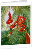 30. The wild tamarind of Jamaica with scarlet pod and barbet, 1880 by Marianne North