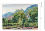 34. View of Mr Morit's garden at Petropolis, Brazil, 1880 by Marianne North