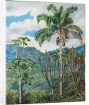36. View in Brazil near Ouro Preto with oil palms, 1880 by Marianne North