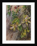 39. Orchids and creeper on Water-worn Boulders in the Bay of Rio Janeiro, Brazil, 1880 by Marianne North