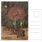42. Flor imperiale, coral snake and spider, Brazil, 1880 by Marianne North