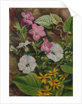 44. Some Brazilian flowers, 1880 by Marianne North