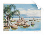 48. Palm trees and boulders in the Bay of Rio, Brazil, 1880 by Marianne North