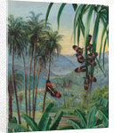 50. Landscape at Morro Velho, Brazil, 1880 by Marianne North