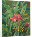 51. Foliage and flowers of a Madagascar Plant, 1880 by Marianne North