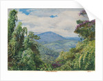 53. View of the Piedade Mountains, from Gongo, Brazil, 1880 by Marianne North