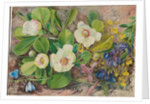 57. Wild flowers of Brazil, 1880 by Marianne North